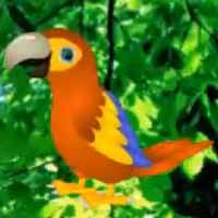 Macaw Parrot Love Rescue
